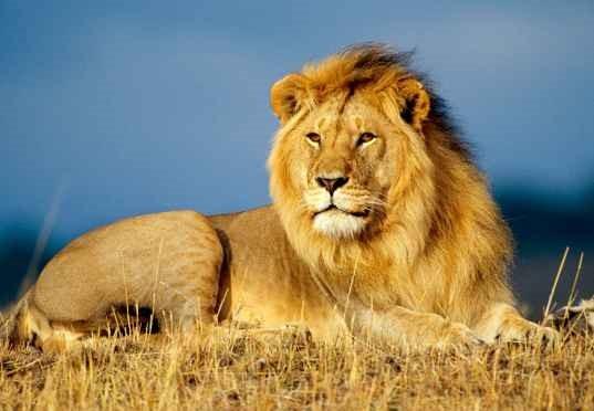 leeuw groep 2